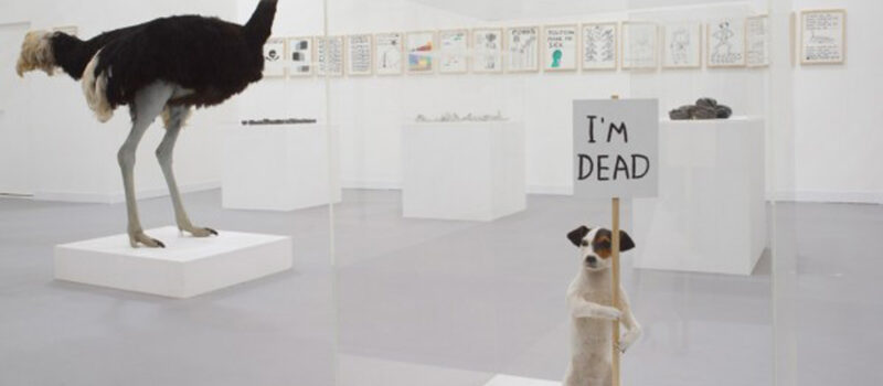 David Shrigley: Artist of the Absurd